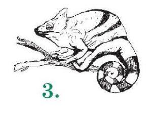 3-Хамелеон