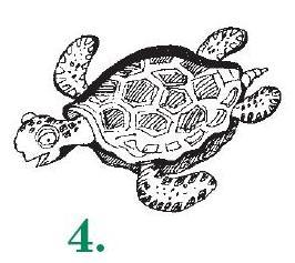 4-Черепаха