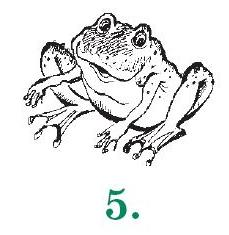5-Лягушка