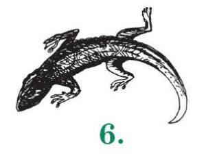 6-Ящерица