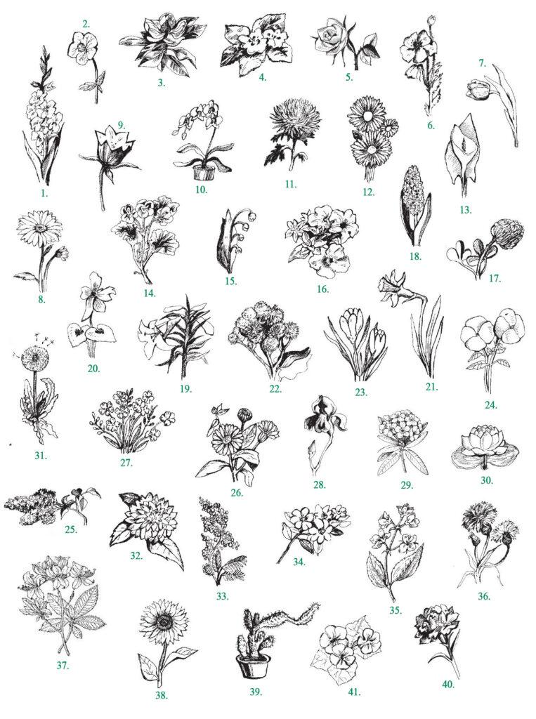 В4. Цветы